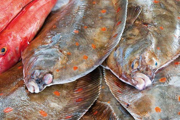 F&F - Fisch und Feinkost - Fischhandel Rostock