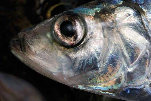 Fisch und Feinkost
